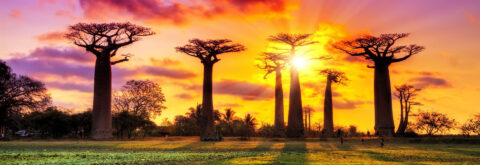 Come to visit Madagascar with us